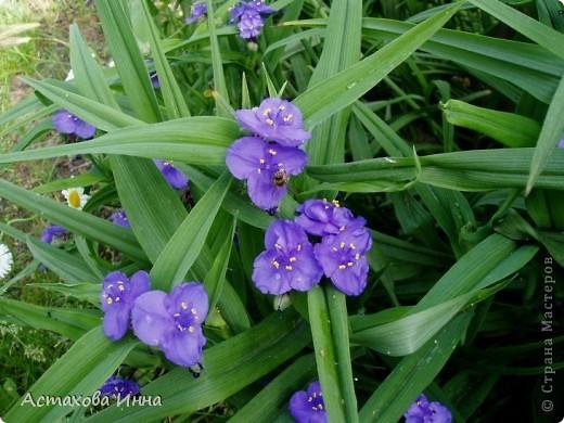 Очень люблю этот садовый цветок, долго вынашивала идею сделать его в технике квиллинг. Вот , получилась такая корзинка. фото 5