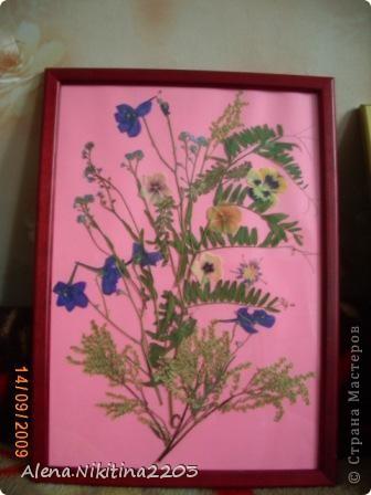 Увидела как-то по телевизору составление картин из сухих цветов, решила тоже попробовать. фото 5