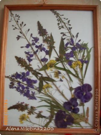 Увидела как-то по телевизору составление картин из сухих цветов, решила тоже попробовать. фото 1