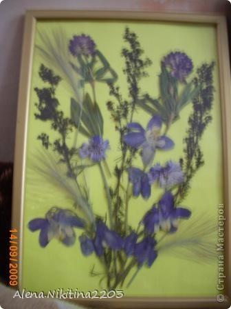 Увидела как-то по телевизору составление картин из сухих цветов, решила тоже попробовать. фото 3