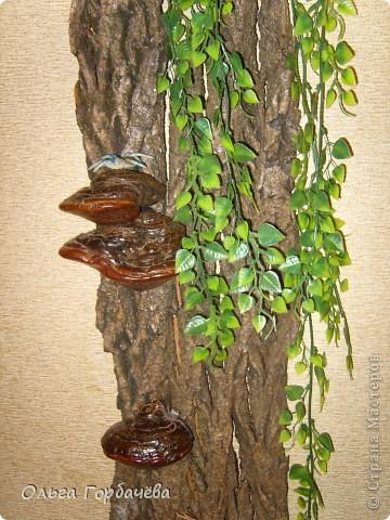 У меня выросло деревце прямо на стене. фото 3