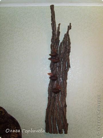 У меня выросло деревце прямо на стене. фото 2