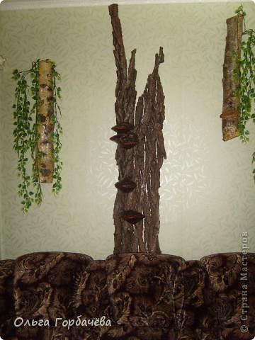 У меня выросло деревце прямо на стене. фото 5
