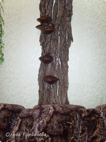 У меня выросло деревце прямо на стене. фото 6