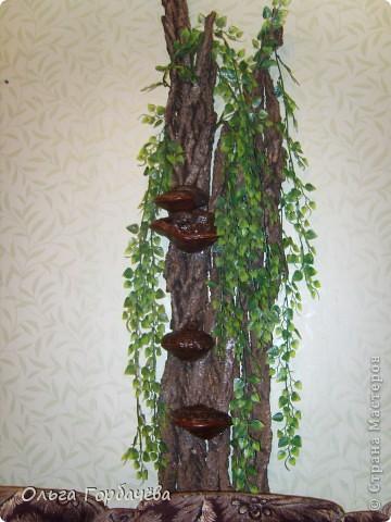 У меня выросло деревце прямо на стене. фото 1
