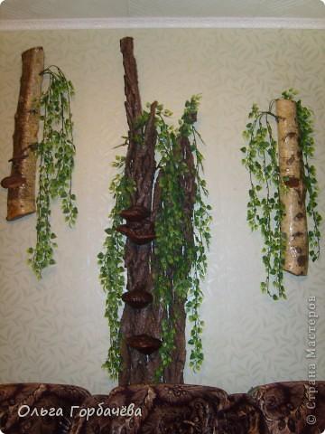У меня выросло деревце прямо на стене. фото 4