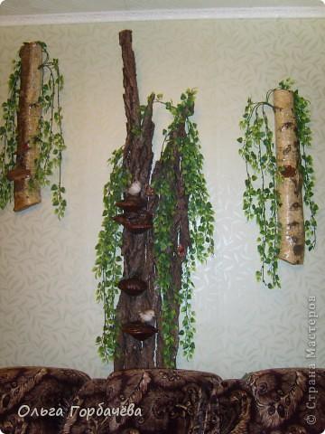 У меня выросло деревце прямо на стене. фото 7