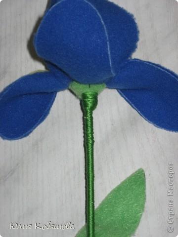Мои любимые цветы. фото 19