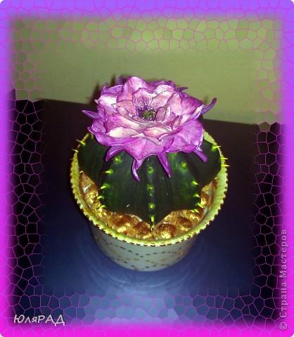 Вот какой цветущий кактус у меня получился из солёного теста. Иголки из зубочисток, а цветок из пластики (сверху покрашен акриловыми красками)))) Горшок покупной, только немного приукрасила. В горшочке есть камешки их я тоже сделала из солёного теста, а потом покрасила медным оттенком))) фото 4