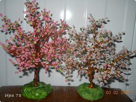 Цветущие сакура и яблонька фото 1