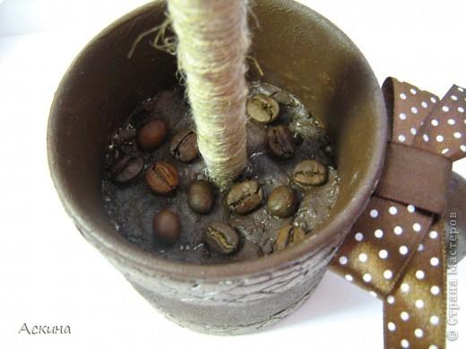 Это мое второе кофейное дерево (первое можете посмотреть тут http://stranamasterov.ru/node/125602). Высота деревца 28 см, диаметр кроны 9 см. Сделала его в подарок зятю. Он очень любит кофе,чай практически не пьет.  фото 3