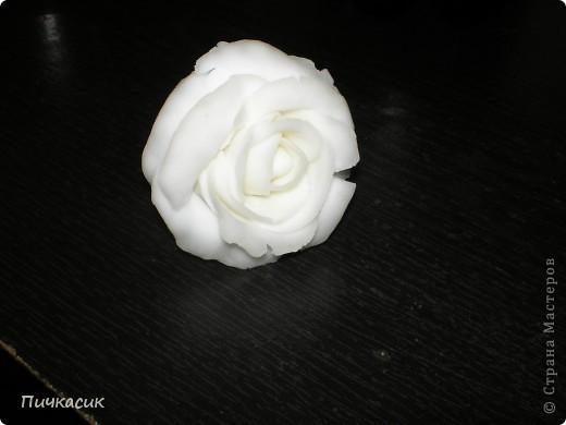 Белая розочка, первенец фото 1