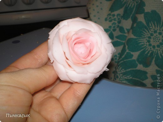 Белая розочка, первенец фото 6