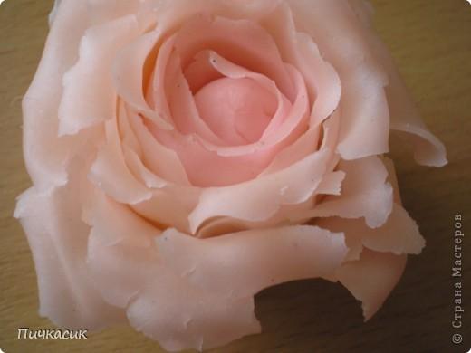 Белая розочка, первенец фото 8