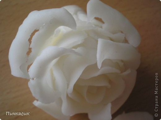 Белая розочка, первенец фото 12