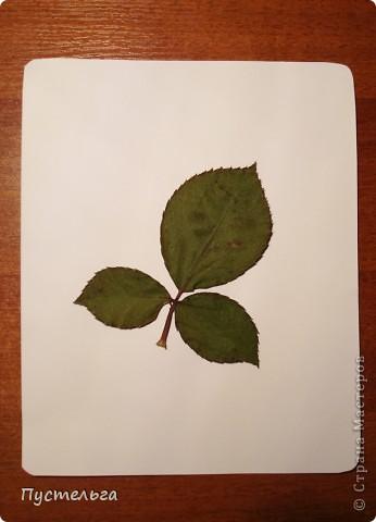 Мастер-класс Рисование и живопись Аэрография для ребят Акварель Материал природный фото 5