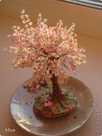 Первое деревце фото 2