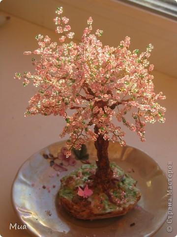 Первое деревце фото 1