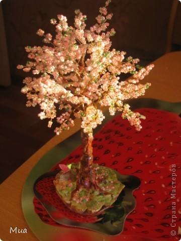 Первое деревце фото 3