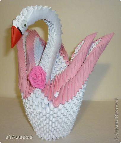 Лебедь фото 4