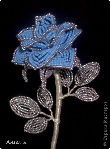 Голубая роза фото 1