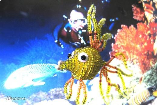 Вот такая рыбка наплелась фото 4