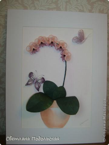 Наконец-то и у меня есть орхидеи.По мотивам работы Ольги К. Работа в рамке фото 5