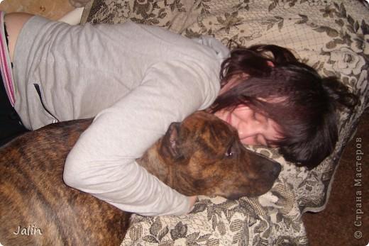 Насмотревшись на любимцев наших Мастеров решила показать и своих ) В особенности то, как они спят...  Это Норд )) фото 14