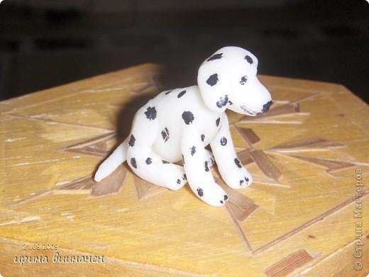 наши животные(тишка, гейция, сэрик) в миниатюре. первые попытки фото 16