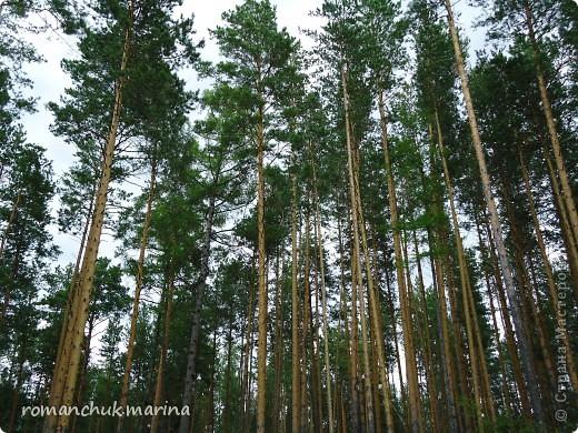 Когда я иду в лес обязательно беру с собой фотоаппарат. фото 9