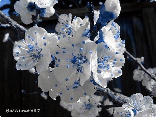 А, если бы яблони цвели синим... фото 6