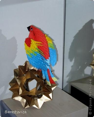 Вот такие чудеса эквилибристики демонстрирует мой попугайчик фото 2