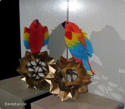 Вот такие чудеса эквилибристики демонстрирует мой попугайчик фото 1