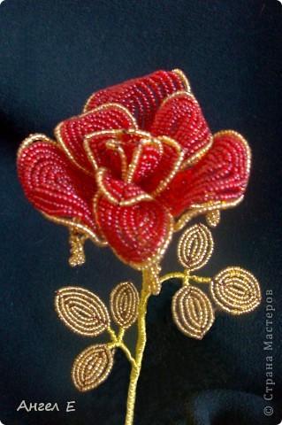 Голубая роза фото 3