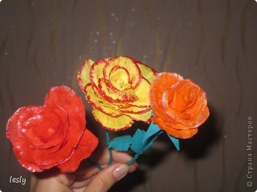 Розы фото 1