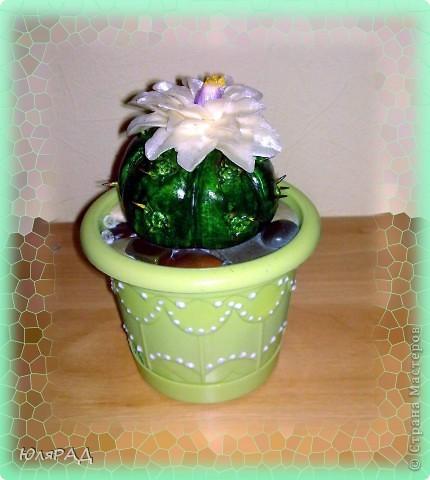 Мой второй кактус из теста))) Только на этот раз цветочек из холодного фарфора. Лепила с фотографии, а как называется этот сорт кактуса не знаю))) фото 4