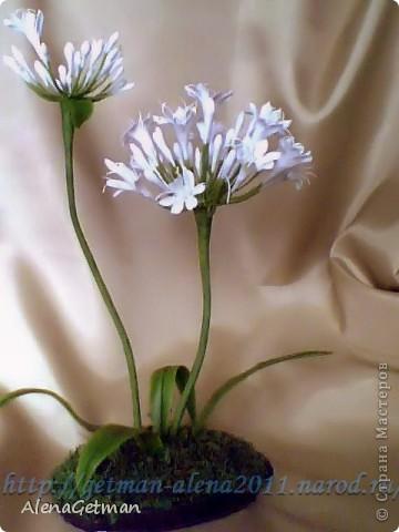 Декоративный лук. фото 1