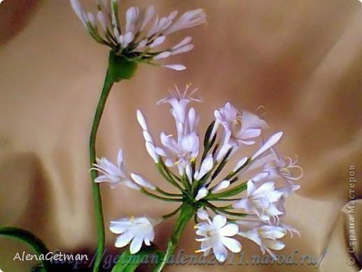 Декоративный лук. фото 2