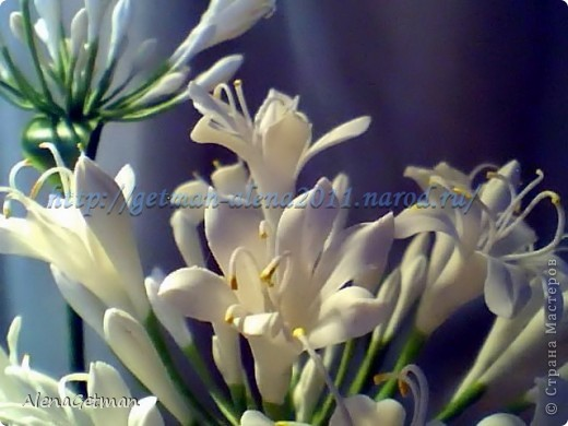 Декоративный лук. фото 5