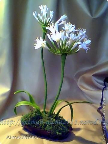 Декоративный лук. фото 6