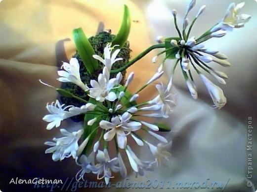 Декоративный лук. фото 7