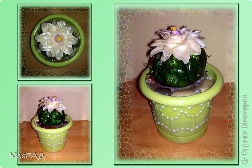 Мой второй кактус из теста))) Только на этот раз цветочек из холодного фарфора. Лепила с фотографии, а как называется этот сорт кактуса не знаю))) фото 1