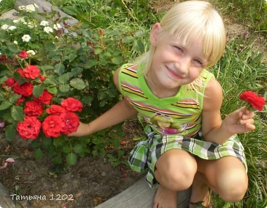 оранжевая роза фото 8