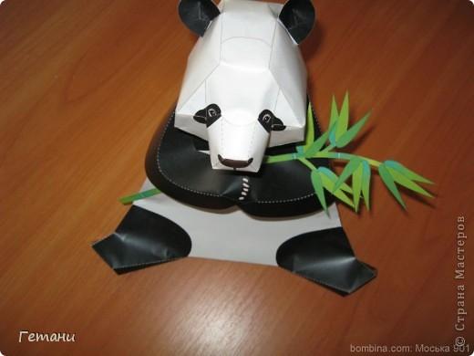 Панда2 фото 3