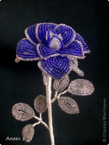 Голубая роза фото 4