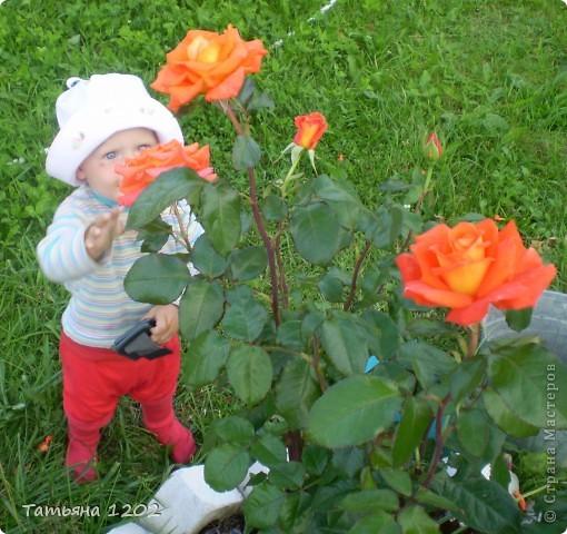оранжевая роза фото 7