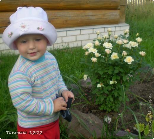 оранжевая роза фото 6