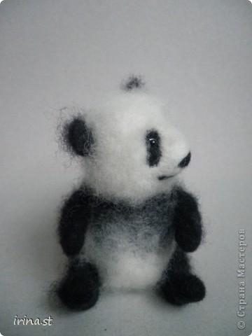 Панда фото 7