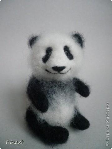 Панда фото 9