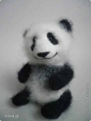 Панда фото 8